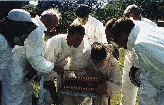 apiculteur koetzingue